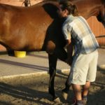 Equine osteopathy, osteopath Pembrokeshire, UK